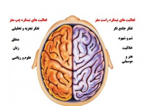 نقش نیمکره چپ مغز در بروز تفکر خلاق