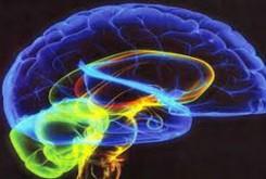 حقایقی در مورد مغز انسان که شاید تا بحال نمی دانستید!