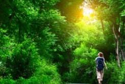 پیاده روی در فضای سبز افکار منفی را دور می کند