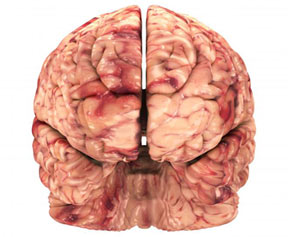 "n00035520 b ""خدا"" در کجای مغز انسان قرار دارد؟"