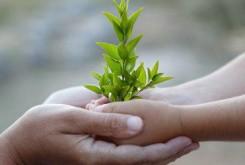 تاثیر فوق العاده طبیعت درمانی بر رفع استرس و افسردگی