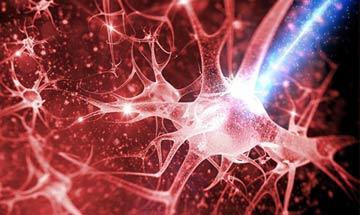 شناسایی سلول های مغز کنترل کننده پیری