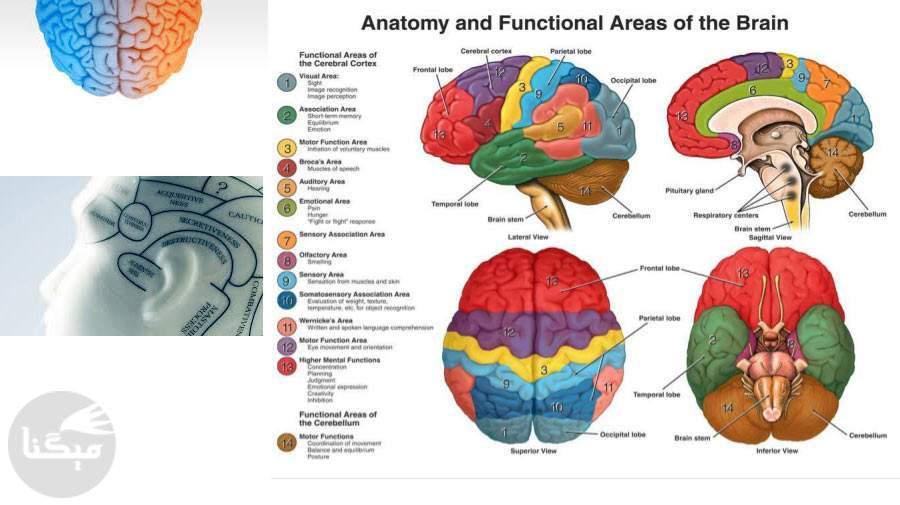 نوروسایکولوژی چیست؟