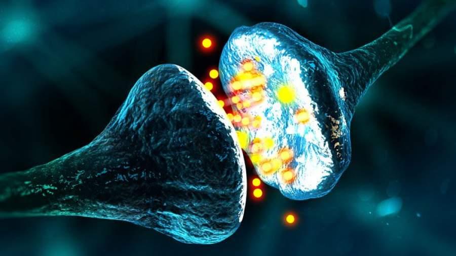 سیناپس و نوروترانسمیترها