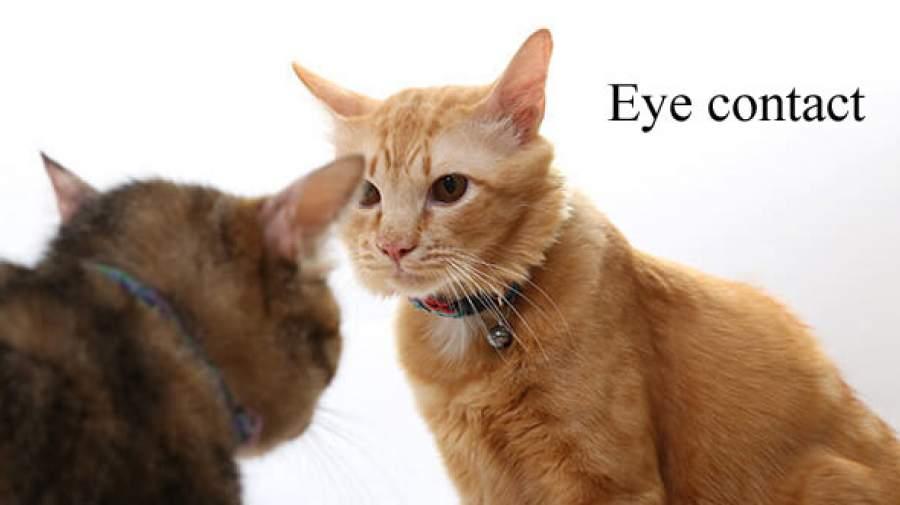 منظور از ارتباط چشمی در روانشناسی چیست؟